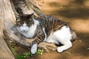 20080506_cat