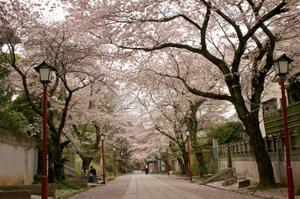 Nakayama_temp1