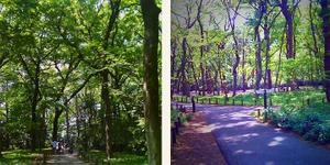Jindai_botanical_garden