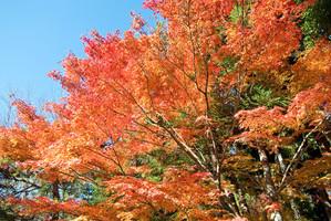 20121125_kyoto2